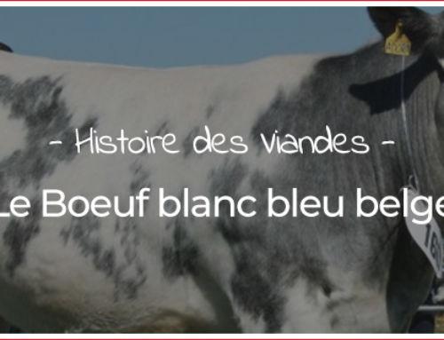 Le bœuf blanc bleu belge